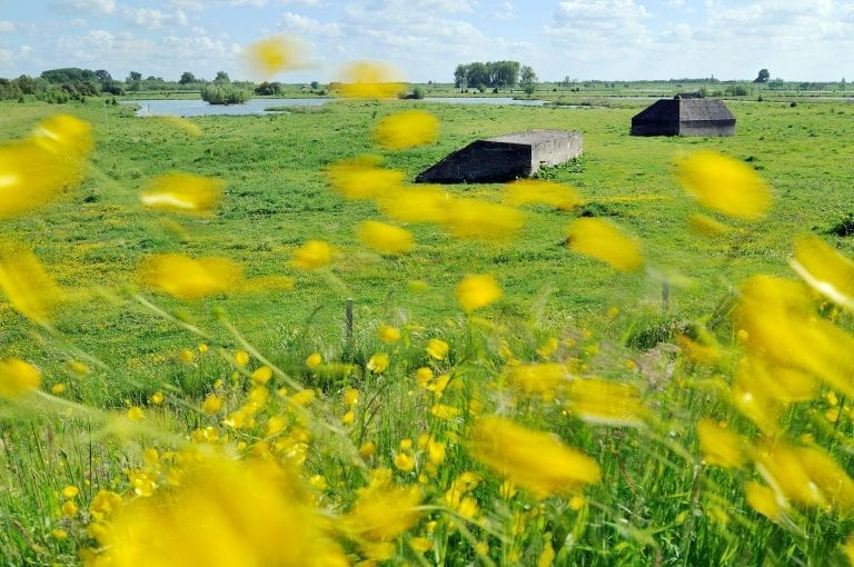 Bunkers and buttercups in meadow at Culemborg