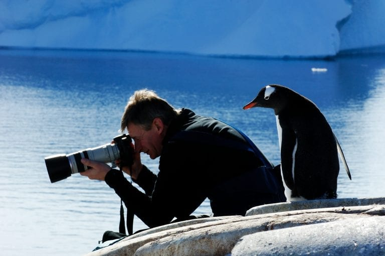 Gentoo penguin and photographer on Antarctica
