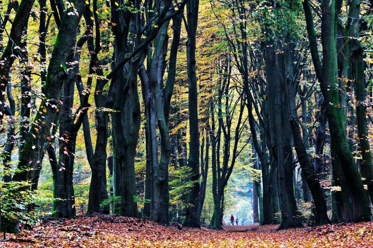 Autumn mood Speulderbos