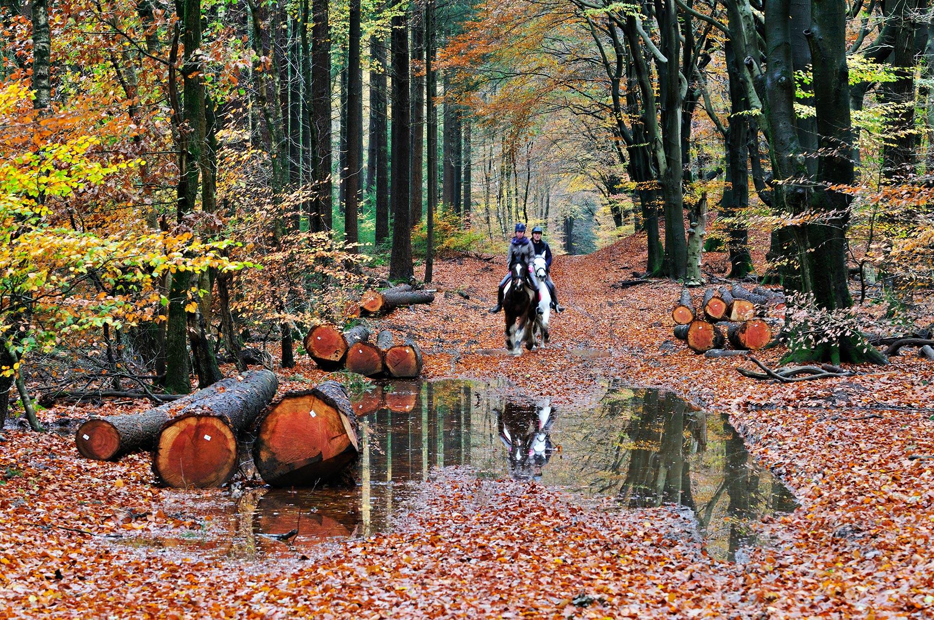 Horsemen in Speulderbos