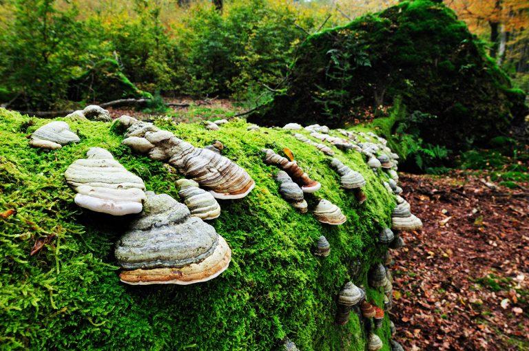 Mushrooms on tree in Speulderbos