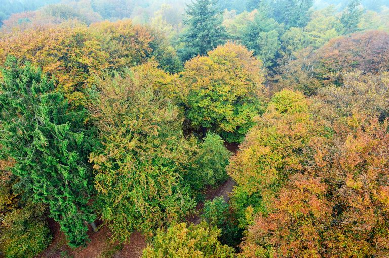 View on the canopy of the trees from out of the watch tower