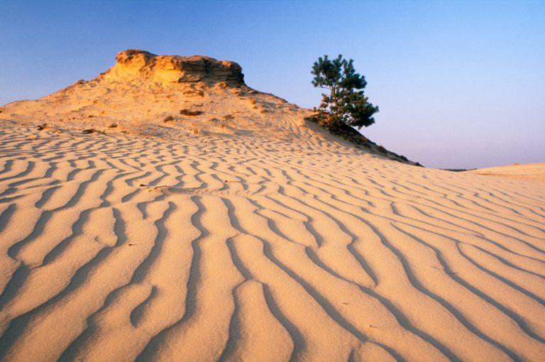 Sand patterns on the Kootwijkerzand