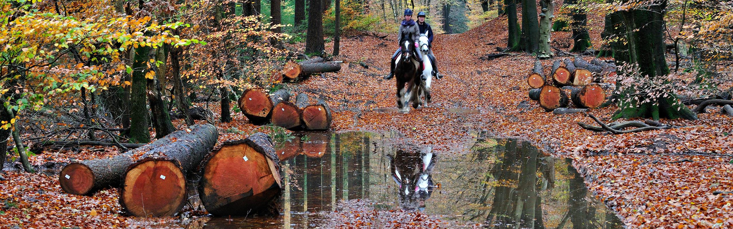 Horses in the Speulderbos in autumn.