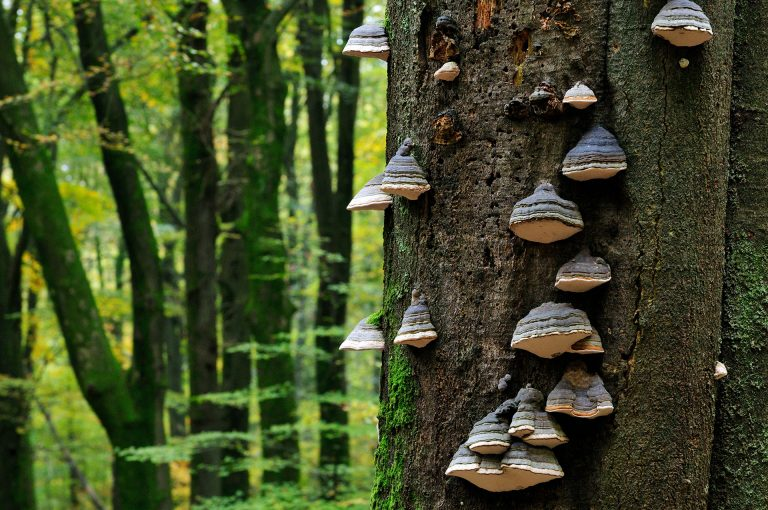 Tree with mushrooms in the forest Speulderbos