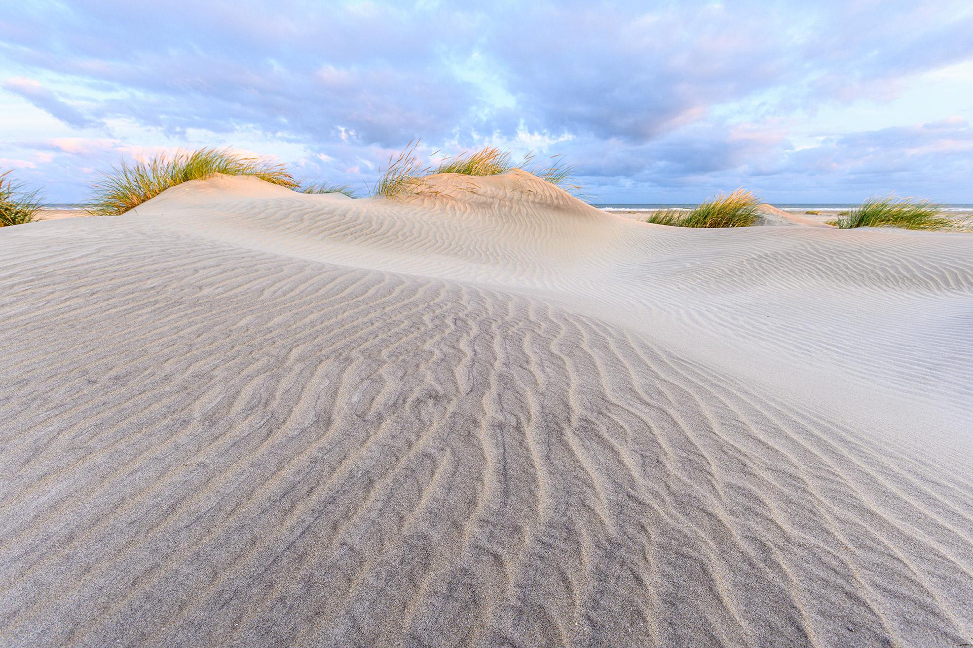 Young dunes on Ameland